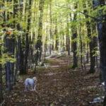scenic-drive-resort-walk-in-the-woods